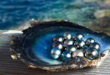 perlas naturales del mar