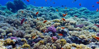 causas acidificacion de los oceanos