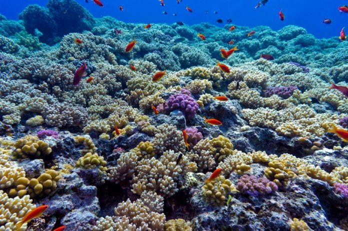 Arrecifes de coral en el fondo del océano