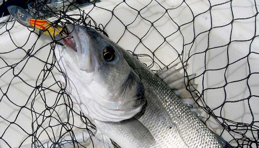 tecnica de pesca al currican