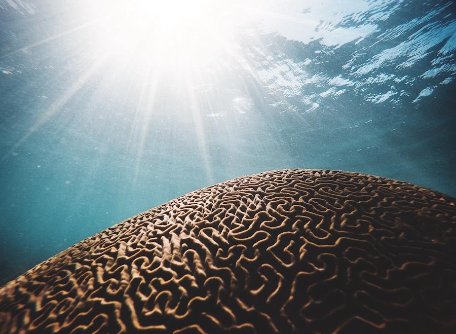 arrecifes de coral