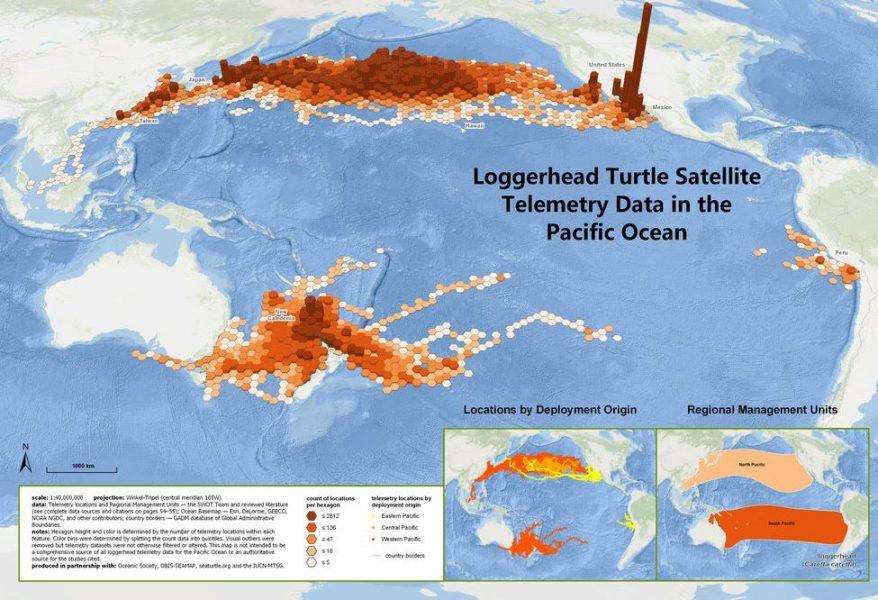 mapa migración tortugas marinas