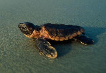 migraciones tortugas