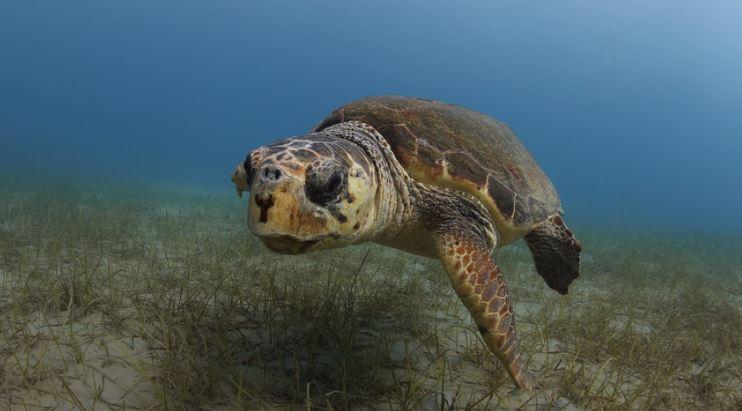 viajes de las tortugas